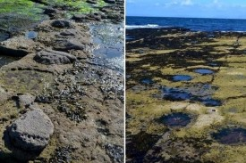 Huellas de dinosaurios en la isla escocesa de Skye  - FOTO: SCOTTISH JOURNAL OF GEOLOGY
