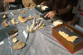 Presentación de los restos hallados en Atapuerca - FOTO: Europa Press